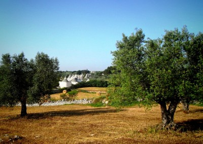 apulia slow travel valle d'itria itriatal itria valley trullo ulivo olive tree olivenbaum puglia apulien
