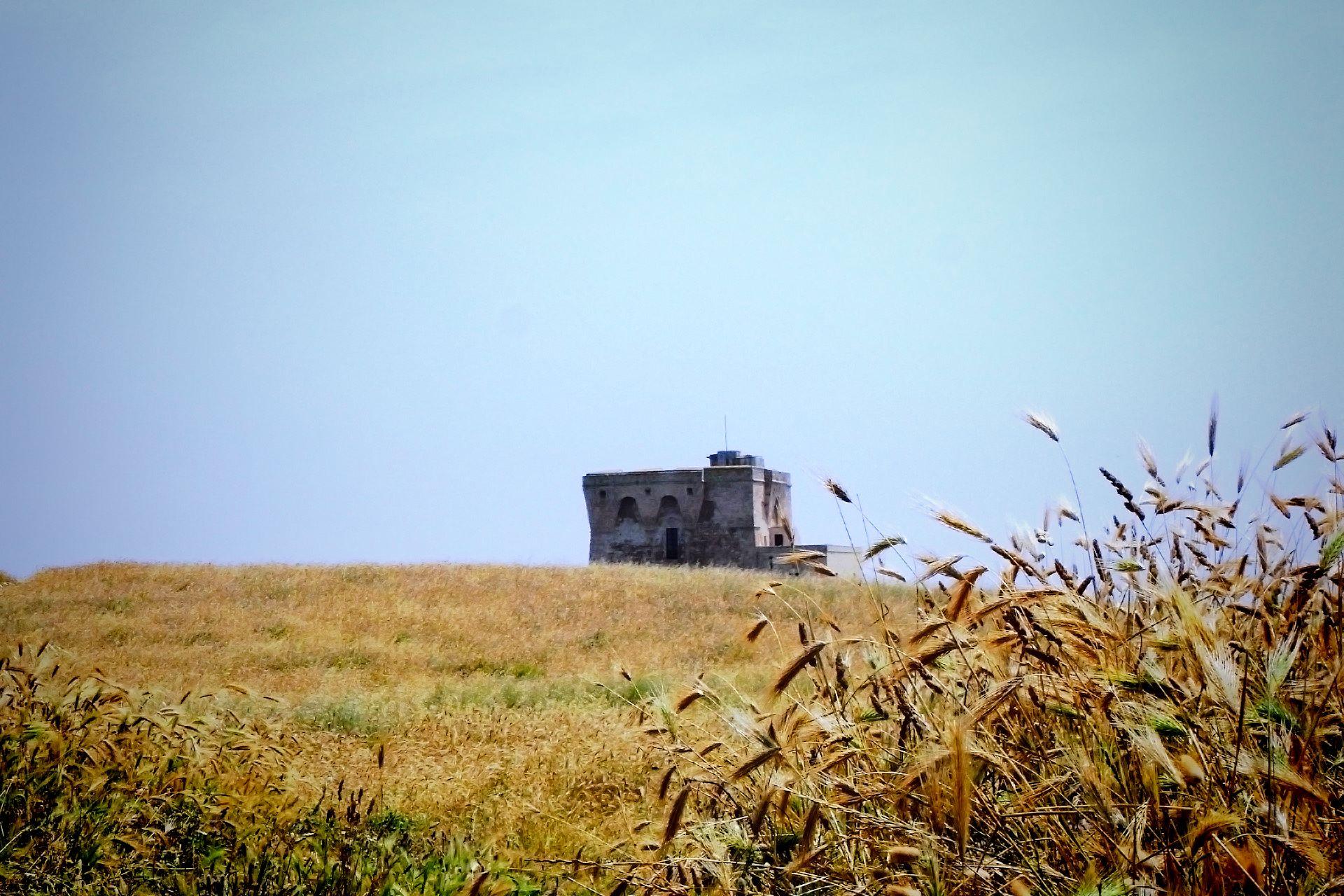 apulia-slow-travel-hiking-tour-torre-guaceto-XVI secolo-prateria-distesa-grano-cereali-riserva-naturale-puglia-apulien.apulia-naturschutzgebiet-getreide-turm-watchtower-torre di avvistamento-grain-country yard-autumn-herbst-autunno