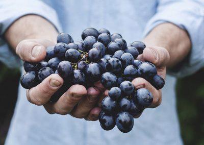 Wine tasting – Gioia del Colle Primitivo